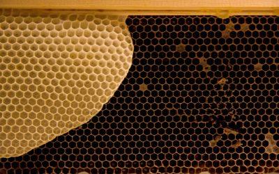 Včelí vosk v kosmetice – jak vybrat ten nejlepší