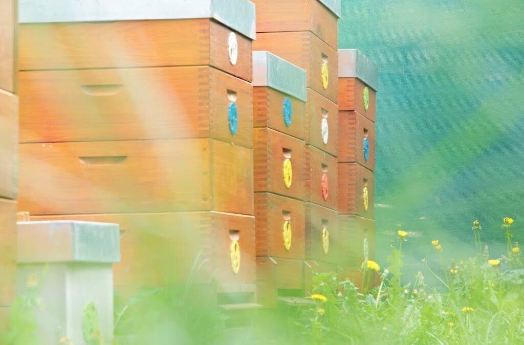 Včelnice z jara – jak to u nás vypadá?